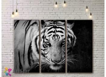 Модульные картины с животными, Art. AMM778010