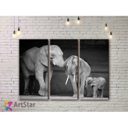 Модульные картины с животными, Art. AMM778012