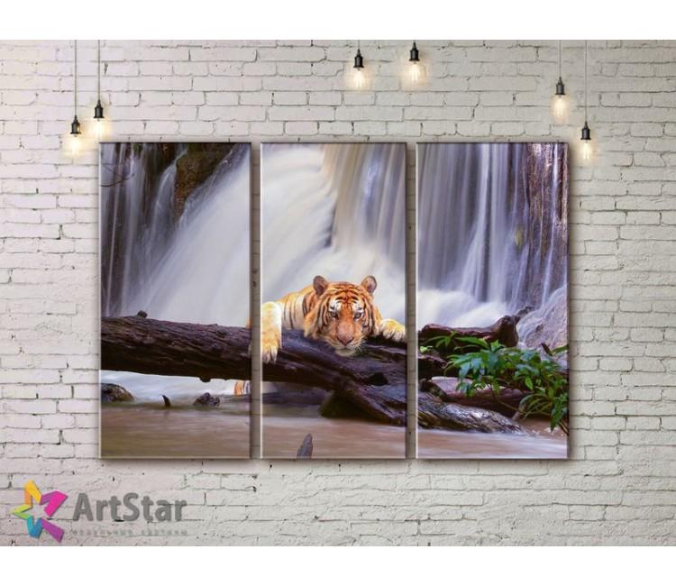 Модульные картины с животными, Art. AMM778022