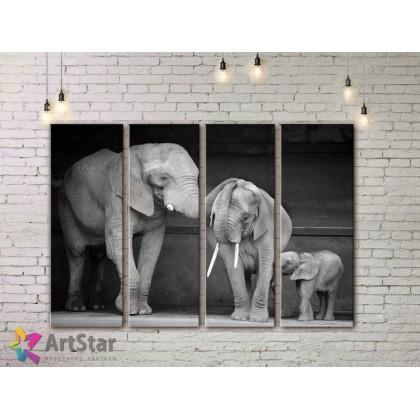 Модульные картины с животными, Art. AMM778026