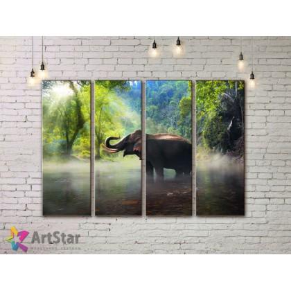Модульные картины с животными, Art. AMM778044