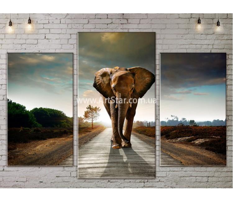 Модульные картины с животными, Art. ANIM778005