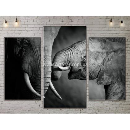 Модульные картины с животными, Art. ANIM778011