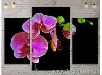 Модульные Картины Цветы, Art. FLOW777011