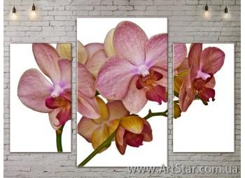 Модульные Картины Цветы, Art. FLOW777019