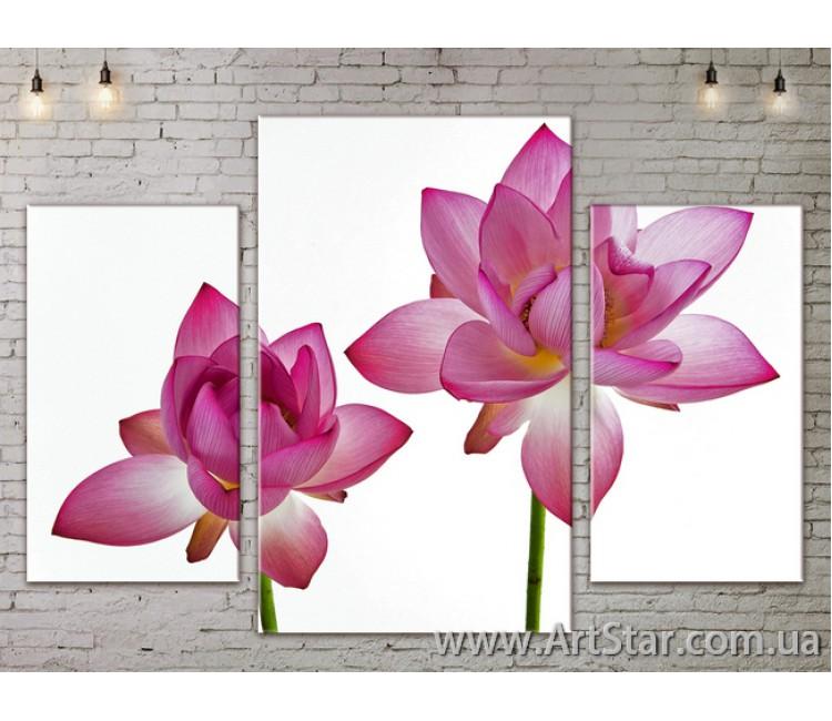 Модульные Картины Цветы, Art. FLOW777025