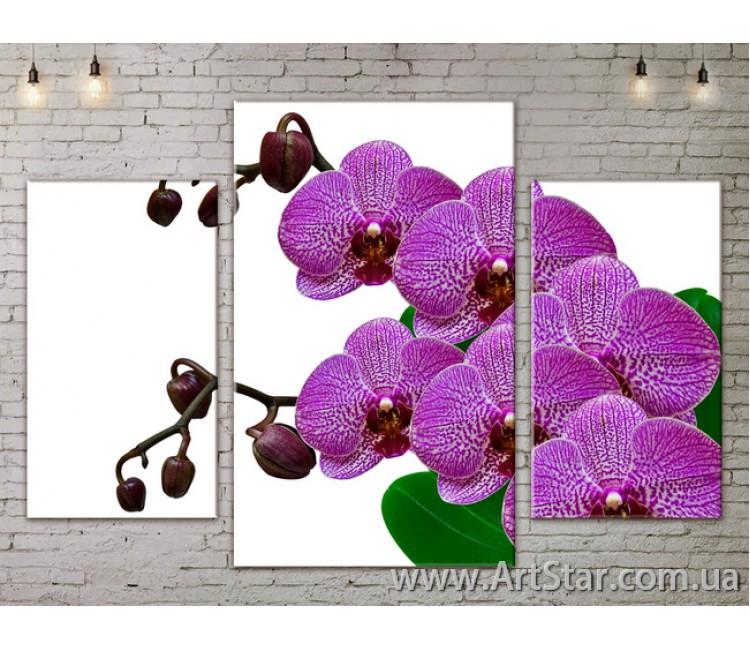 Модульные Картины Цветы, Art. FLOW777029