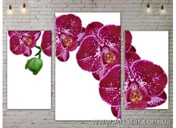 Модульные Картины Цветы, Art. FLOW777053