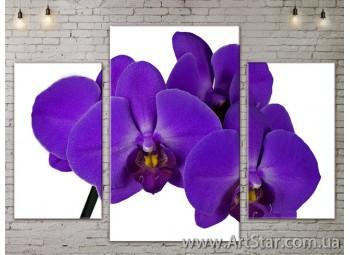 Модульные Картины Цветы, Art. FLOW777073