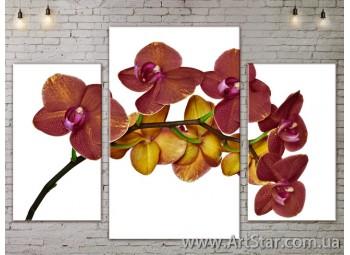 Модульные Картины Цветы, Art. FLOW777219