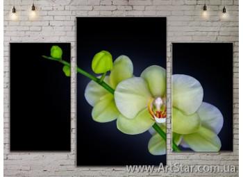 Модульные Картины Цветы, Art. FLOW777231