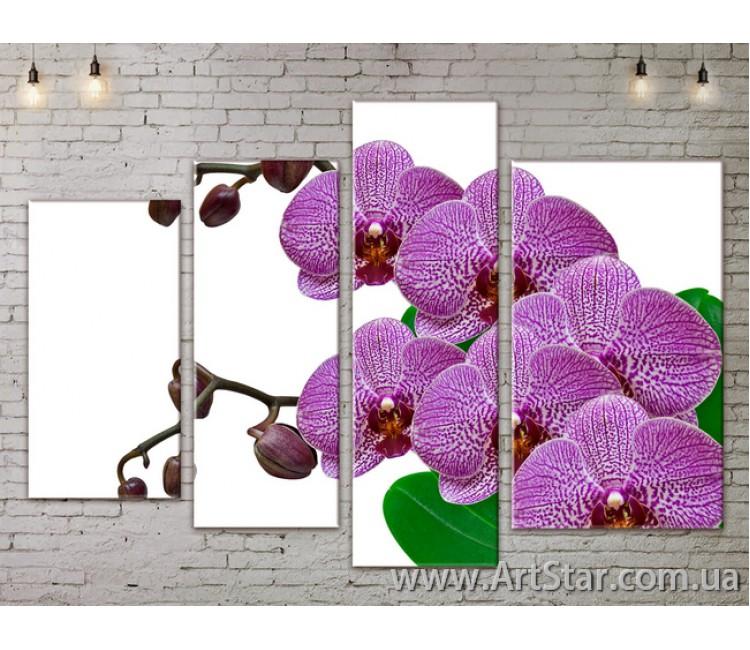 Модульные Картины, Цветы, Art. FLOW777312