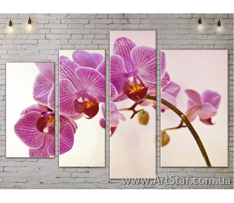 Модульные Картины, Цветы, Art. FLOW777326