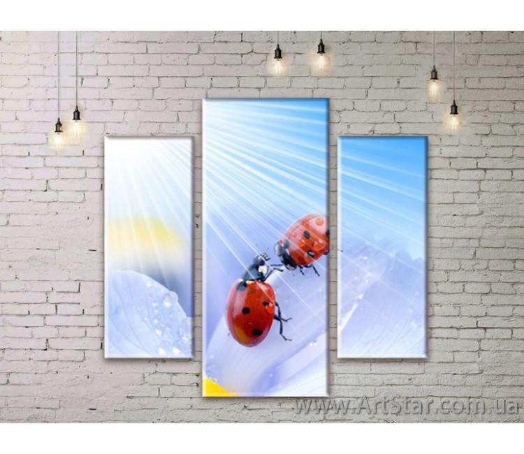 Модульные Картины Цветы, Art. FLWM0035