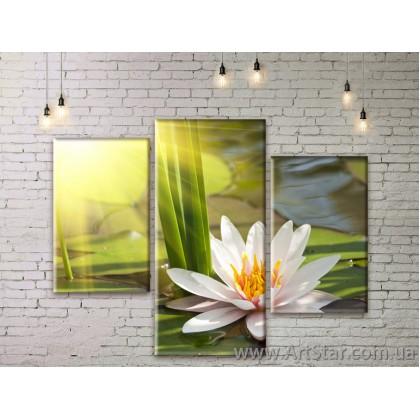 Модульные Картины Цветы, Art. FLWM0105