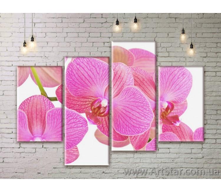 Модульные Картины Цветы, Art. FLWM0137
