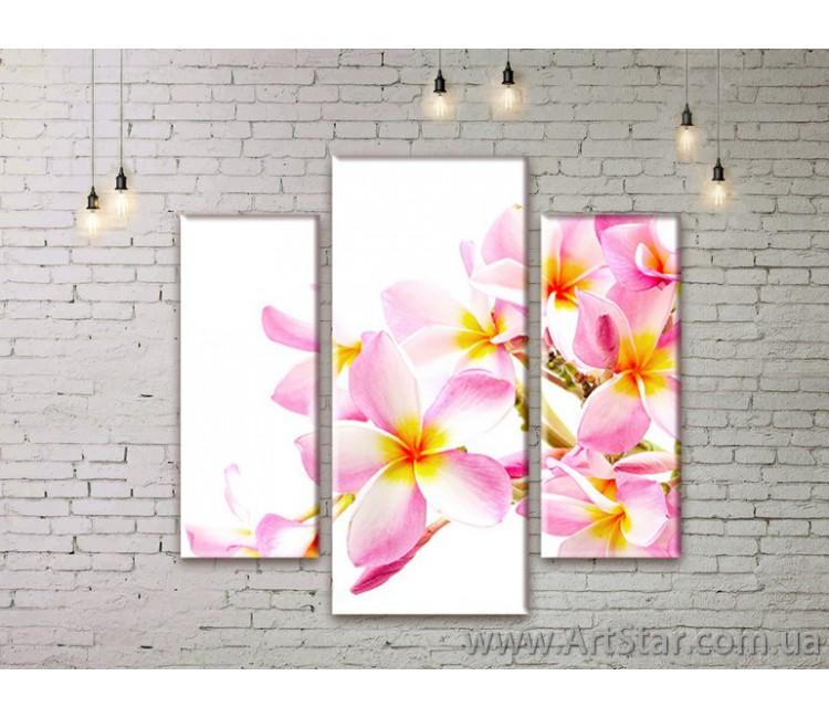 Модульные Картины Цветы, Art. FLWM0223