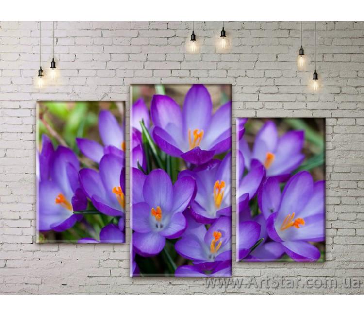 Модульные Картины Цветы, Art. FLWM0239