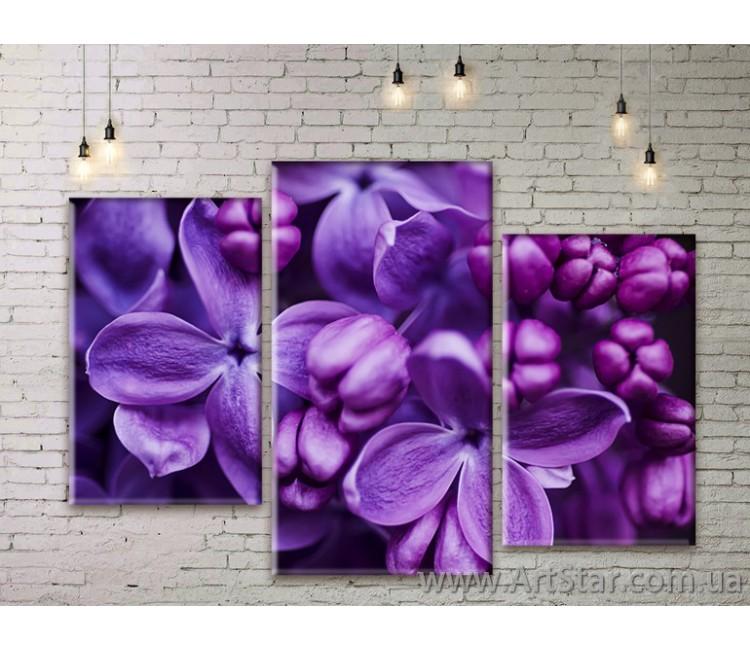 Модульные Картины Цветы, Art. FLWM0305