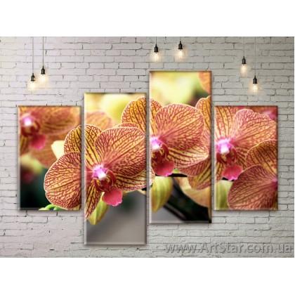 Модульные Картины Цветы, Art. FLWM0307