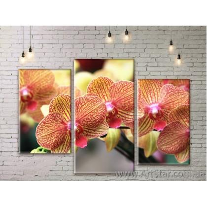 Модульные Картины Цветы, Art. FLWM0311