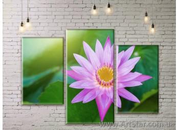 Модульные Картины Цветы, Art. FLWM0359