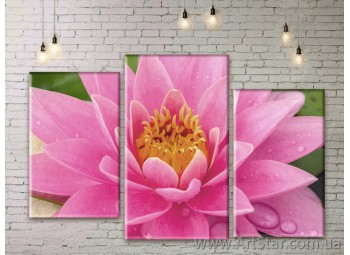 Модульные Картины Цветы, Art. FLWM0399