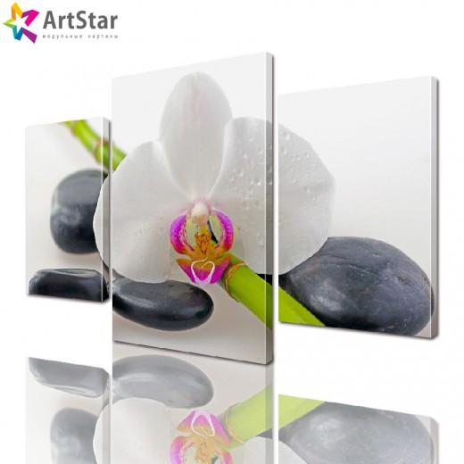 Модульная картина - Белая орхидея, Art. flrs_0062