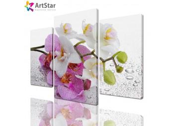 Модульная картина - Ветка орхидеи, Art. flrs_0066