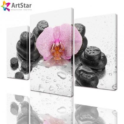 Модульная картина - Орхидея на камнях, Art. flrs_0067