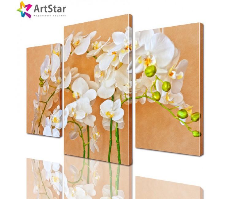 Модульная картина - Красивая орхидея, Art. flrs_0072