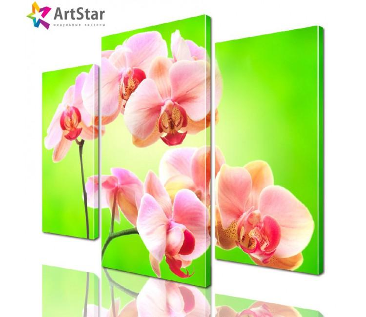 Модульная картина - Орхидея на зеленом, Art. flrs_0075