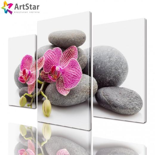 Модульная картина - Орхидея на камнях, Art. flrs_0078