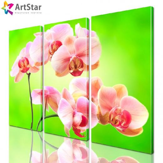 Модульная картина - Цветы, Art. flrs_0035