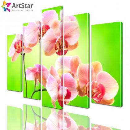 Модульные картины - Ветка розовой орхидеи, Art. flrs_0235