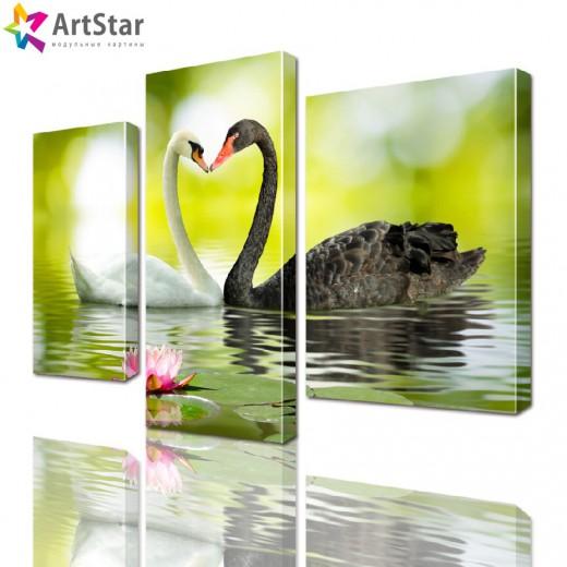 Картина модульная - Черный и белый лебедь, Art. anml_0047